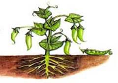 Убедиться что растения питаются и