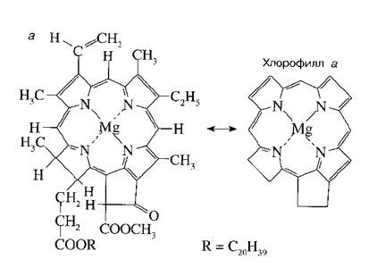 Схема строения молекулы